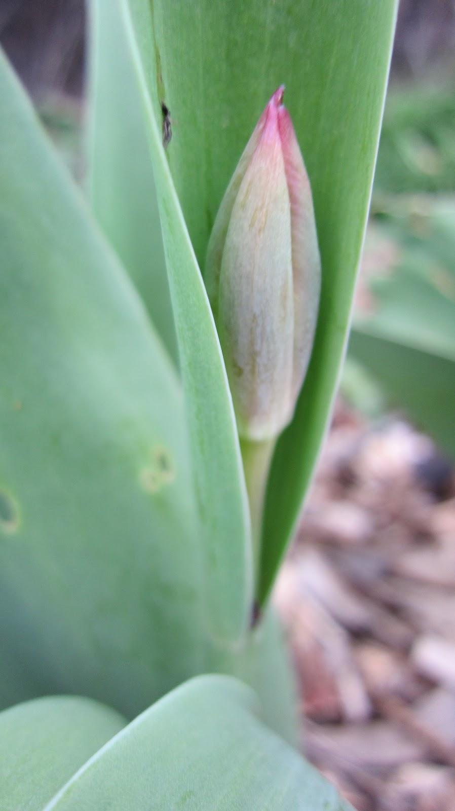 Tiptoe Through The Tulips Gyaru Makeup Tutorial: BiRDEYE Handmade: Tiptoe Through The Tulips With Me