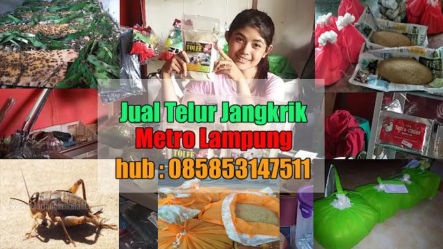 Jual Telur Jangkrik Kota Metro Hubungi 085853147511