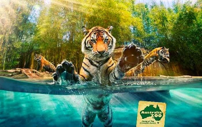 10 of the World's Most Famous Zoos - Sunshine Coast, Australia
