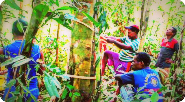 Pemprov Papua Barat Keluarkan SK Hak Pengelolaan Hutan Desa