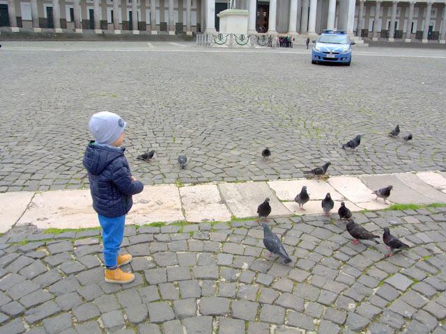 gołębie, Włochy, Neapol