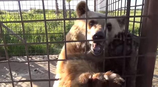 Vamos ajudar a por um fim na exploração de ursos na Albânia cabbec425fb1