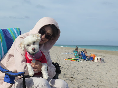 Dog friendly Juno Beach in Florida.