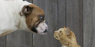 Το ημερολόγιο ενός σκύλου και μιας γάτας