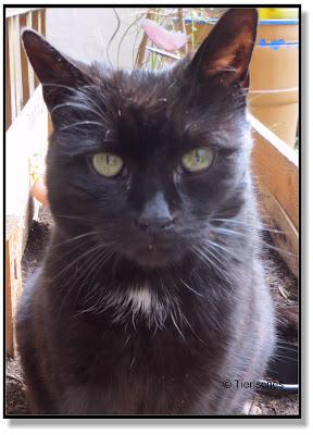 Katze 16 Jahre alt