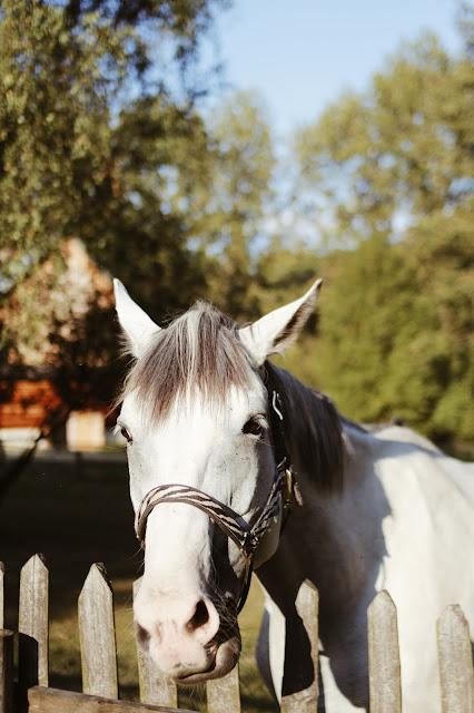 stadnina koni chorzów