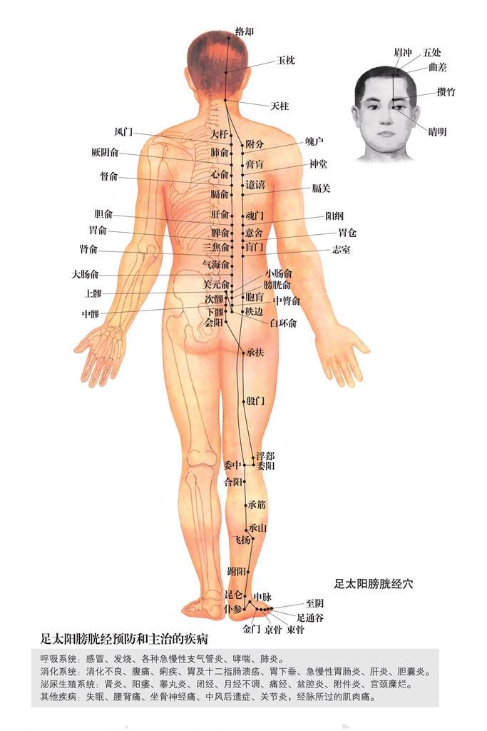 背部穴道圖 - 背部穴道膀胱經 | Source:jingluoxuewei.com/zixun/112.html