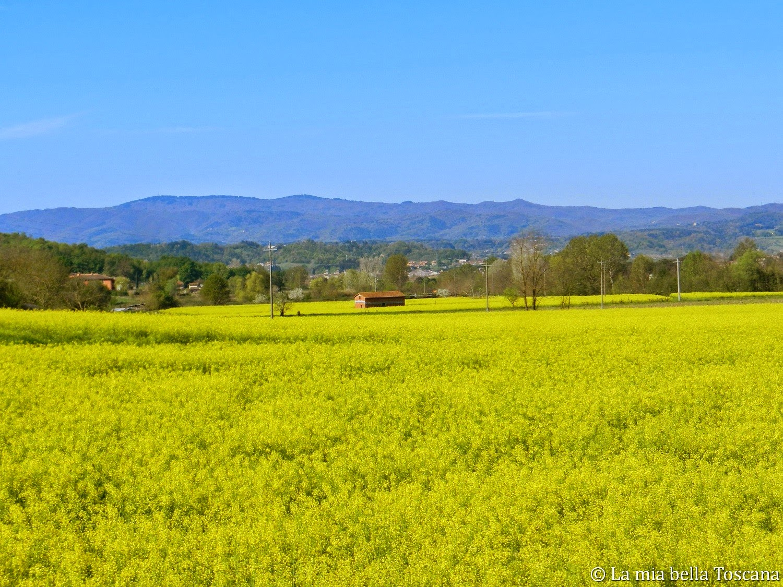 Fiori Gialli Toscana.I Fiori Di Primavera Nella Valle Dell Arno La Mia Bella Toscana