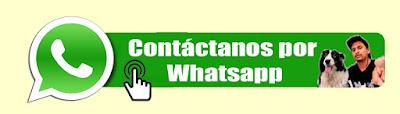 Escuela Canina Whatsapp +51963262738