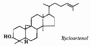 Thành phần hóa học Xương Rồng - Euphorbia antiquorum - Nguyên liệu làm thuốc Chữa bệnh Mắt Tai Răng Họng