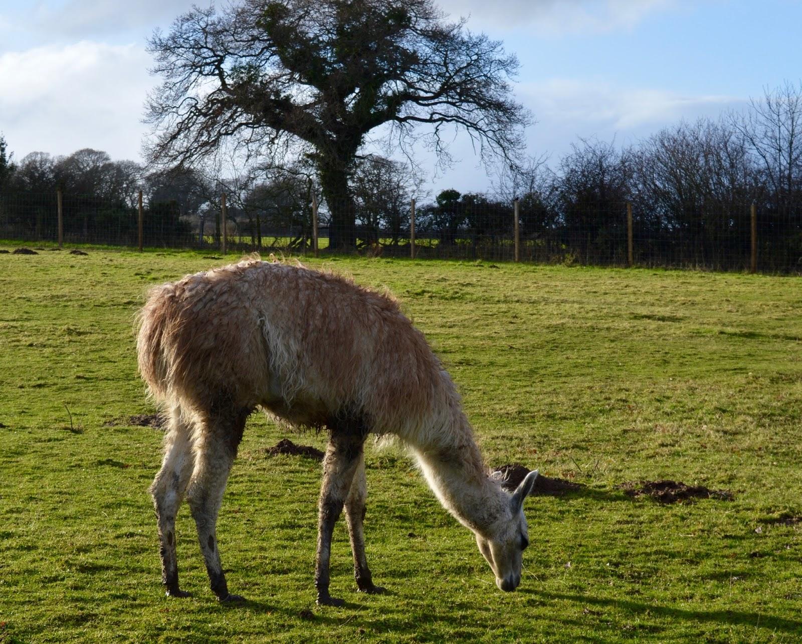 Northumberland County Zoo Reviews -  - farm animals