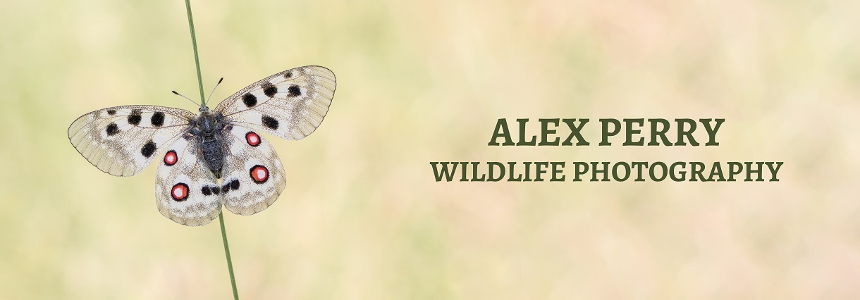 Alex Perry Wildlife Photography