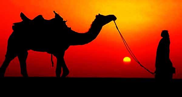 ibadah qurban dan keutamaannya, hadits, al qur'an, unta, www.langitallah.com
