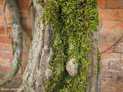 Wisteria tree trunk by We Laugh Indoors