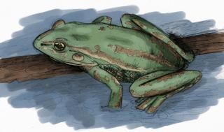 Frog Story in Hindi