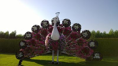 """"""" معجزة دبي""""أكبر حديقة زهور في العالم - Miracle GardenDubai يوم جميل في حديقة الزهور"""