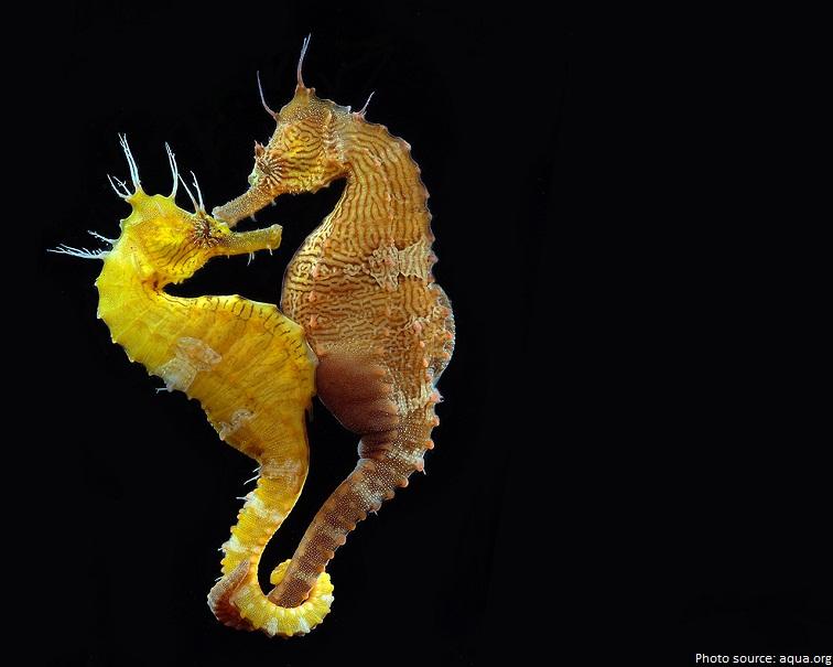 47 Gambar Hewan Kuda Laut Gratis Terbaru