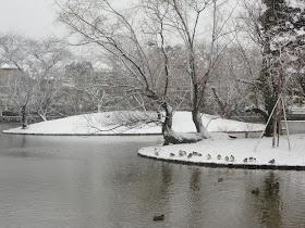 雪の神苑ぼたん庭園