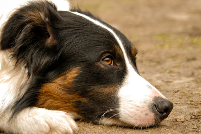 Dog Health Info You Should Know
