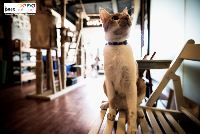 cats in cafes singapore