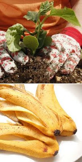Alimenter votre compost avec la peau de banane