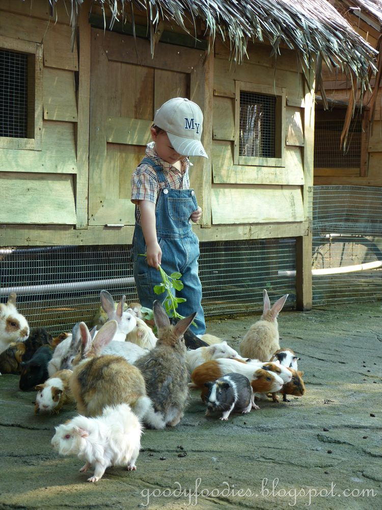 Goodyfoodies Fun Things To Do With Kids Farm In The City