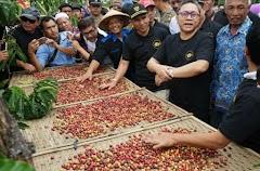 Kampung Robusta Dari Lampung Barat