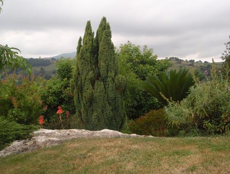 jardín en agosto