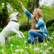 5 Tips That Make It Easier To Train Your Pet | A Month of Thursdays