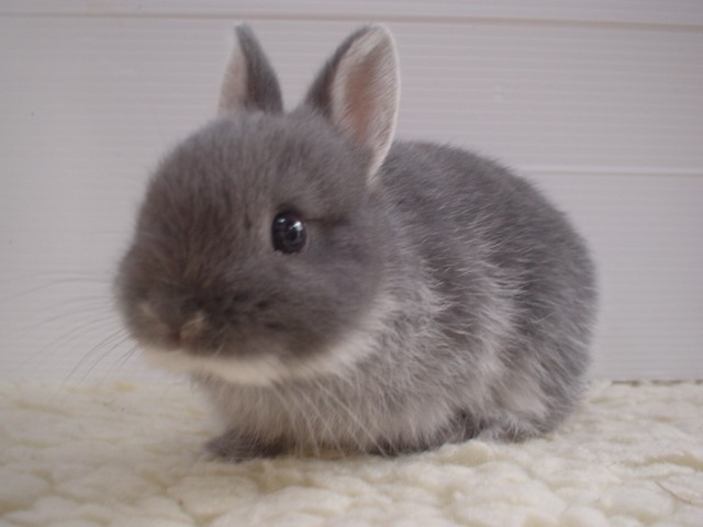 The Greatest Blog Alive: Fluffy Bunnies!!