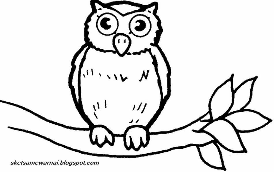 Sketsa Mewarnai  Gambar  Burung  Hantu  Sketsa Mewarnai
