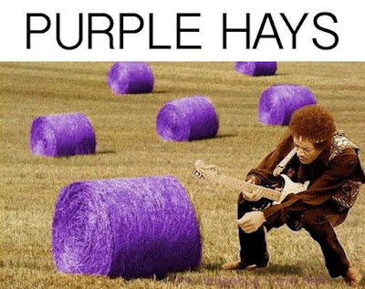 Funny Jimmy Hendricks Purple Hays Pun Picture
