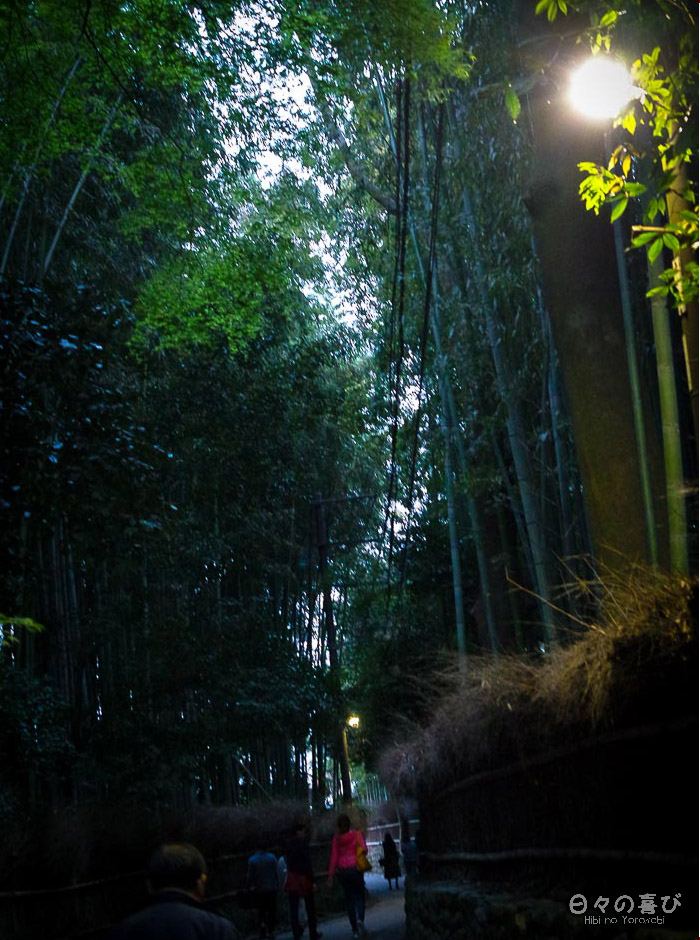 bambouseraie d'arashiyama, visite nocturne, Kyoto