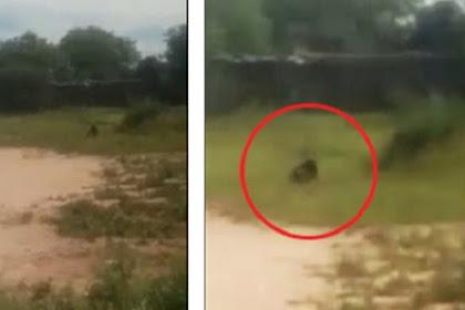 Mahluk Jahat Goblin Terlihat di Lapangan, Anak-anak Ketakutan