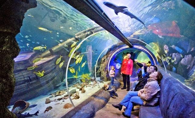 Observação no Aquário Sea Life Orlando