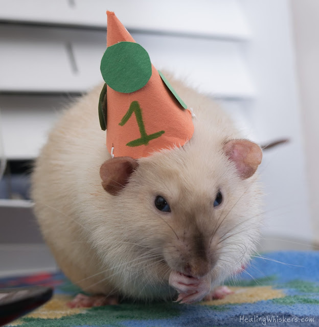 Jasper with a party hat