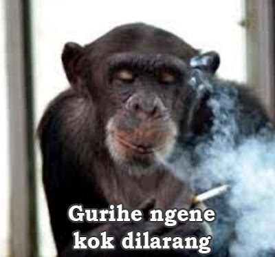 foto monyet sedang merokok
