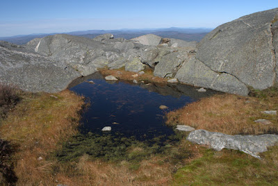 Tiny pool surrounded by dried vegetation at top of Mt. Monadnock