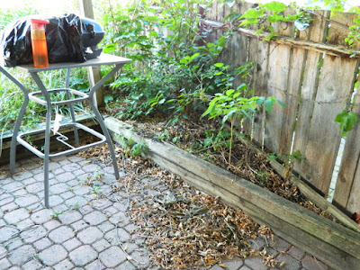 Little Italy Palmerston  Toronto Back Yard Cleanup before by Paul Jung Gardening Services