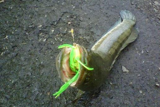 Para angler mania terutama peminat mancing dengan teknik casting hal yang satu ini minima Cara Buat Umpan Tiruan Kodok atau Froggy