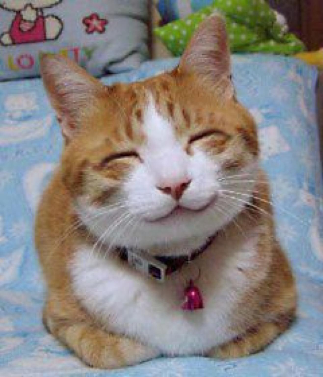Ceritaapasaja Gambar Kucing Lucu