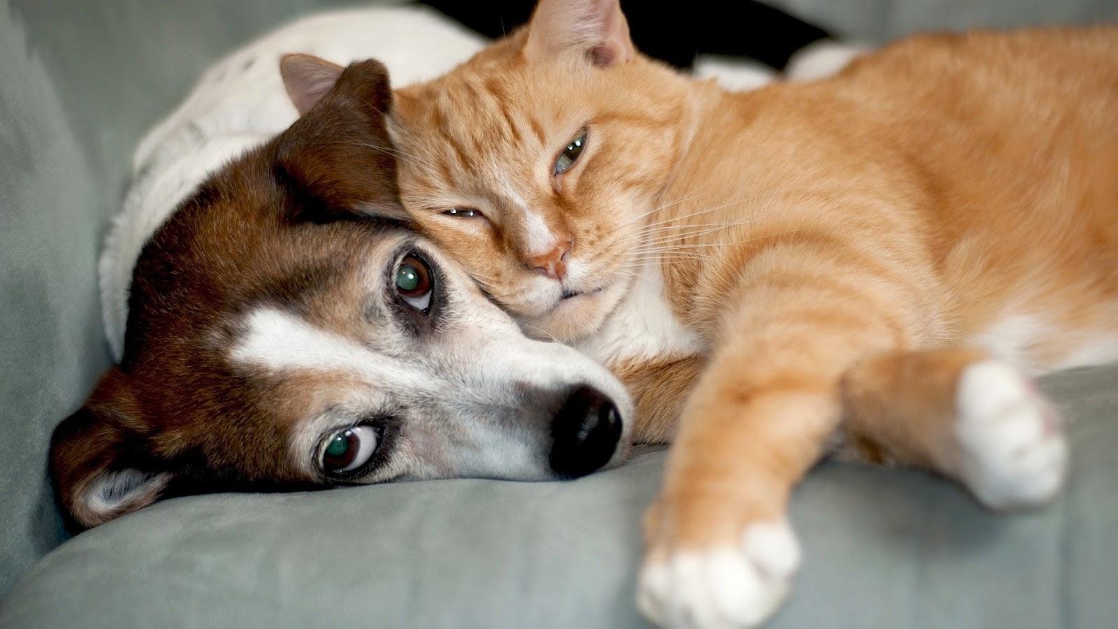 Rencontre chat et chien
