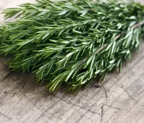 Rosemary and hair growth