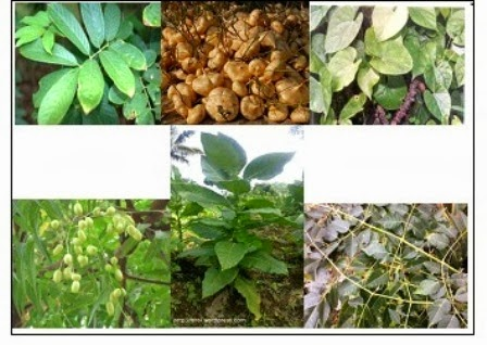Bahan Bio Pestisida