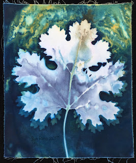 Wet cyanotype, Sue Reno, Image 20