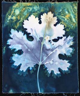 Wet cyanotype, Sue Reno, Image 20