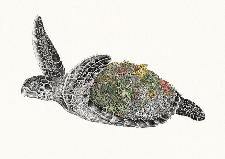 03-Hawksbill-Sea-Turtle-Nathan-Ferlazzo-www-designstack-co