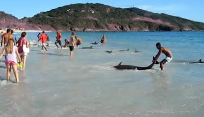 Un Hombre filmaba en la Playa, !cuando algo Increíble sucedió ¡