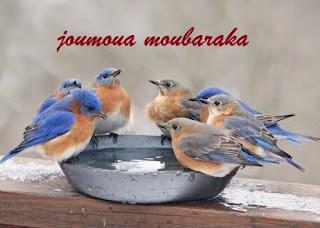 joumoua moubaraka pour