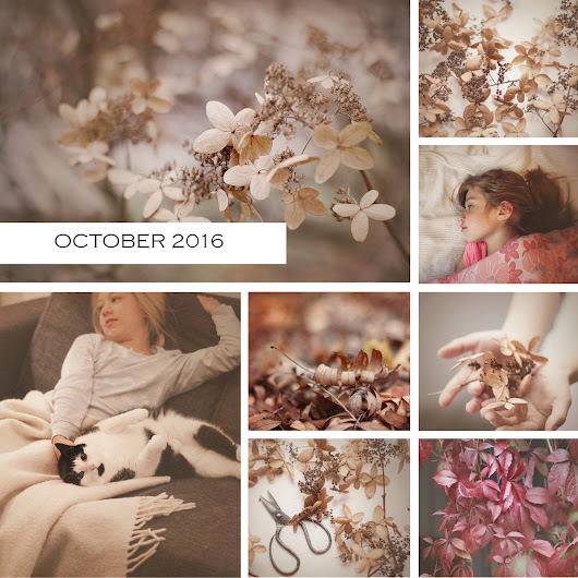 A month in photos {October 2016}